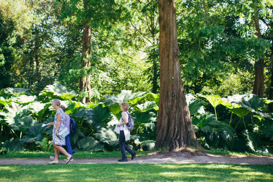 Dawn redwoods, photograph by Greg Milner, photography, Winterbourne House and Garden, Digging for Dirt
